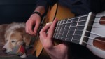 The Last of Us — Main Theme (AcousticTrench), finger tab
